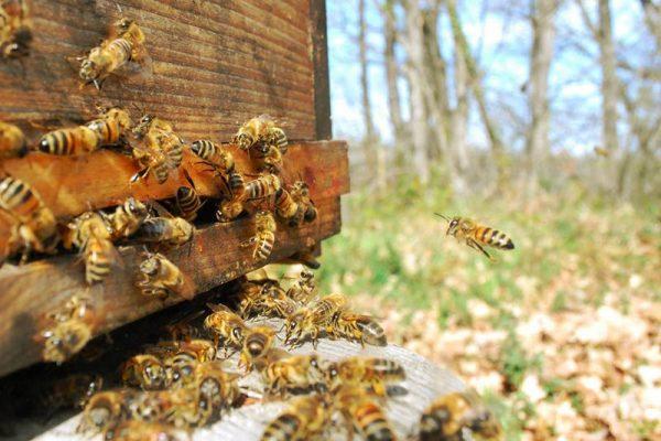 abeilles-ruches-miel-direct-producteurs-francais