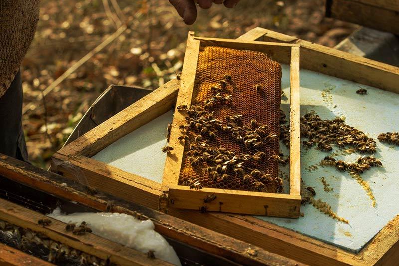 abeilles sur cadre en hiver