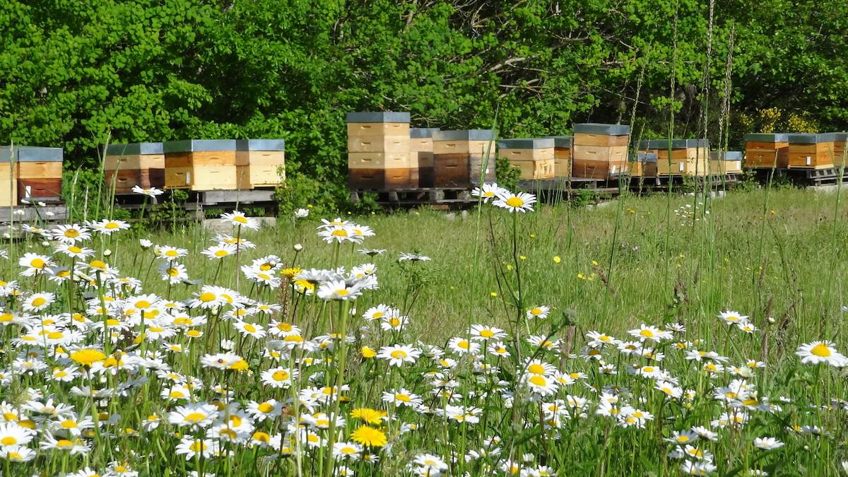 Quelles réglementations pour avoir des ruches chez soi