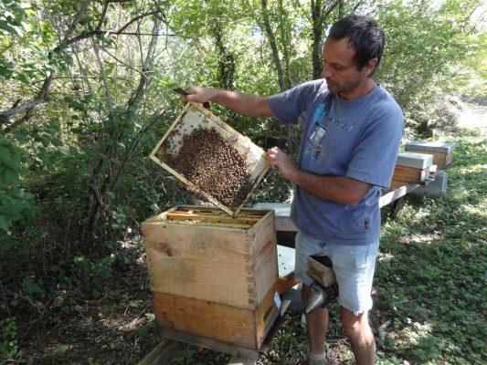 ouverture d'une grande ruche par Philippe huau