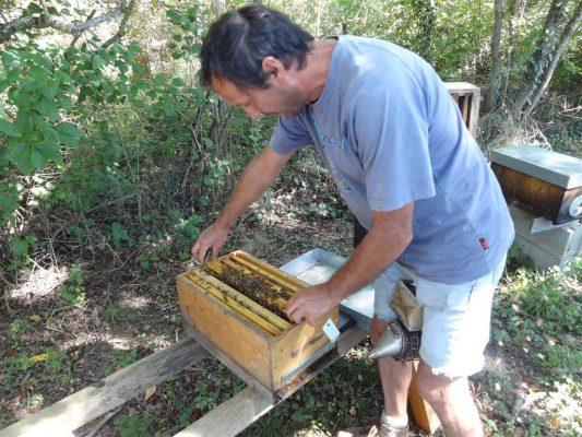 ouverture d'une petite ruche par Philippe huau