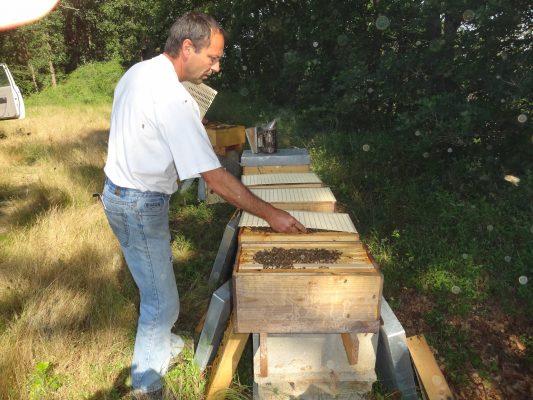 pose de grille à reine entre le corps de la ruche et la hausse par Philippe huau