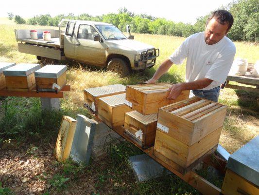 pose de hausse sur les ruches par Philippe huau