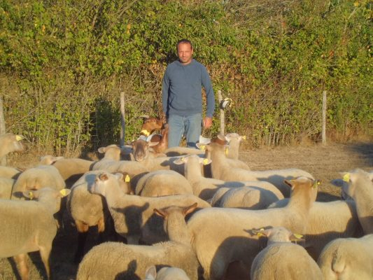 Philippe Huau avec ses moutons