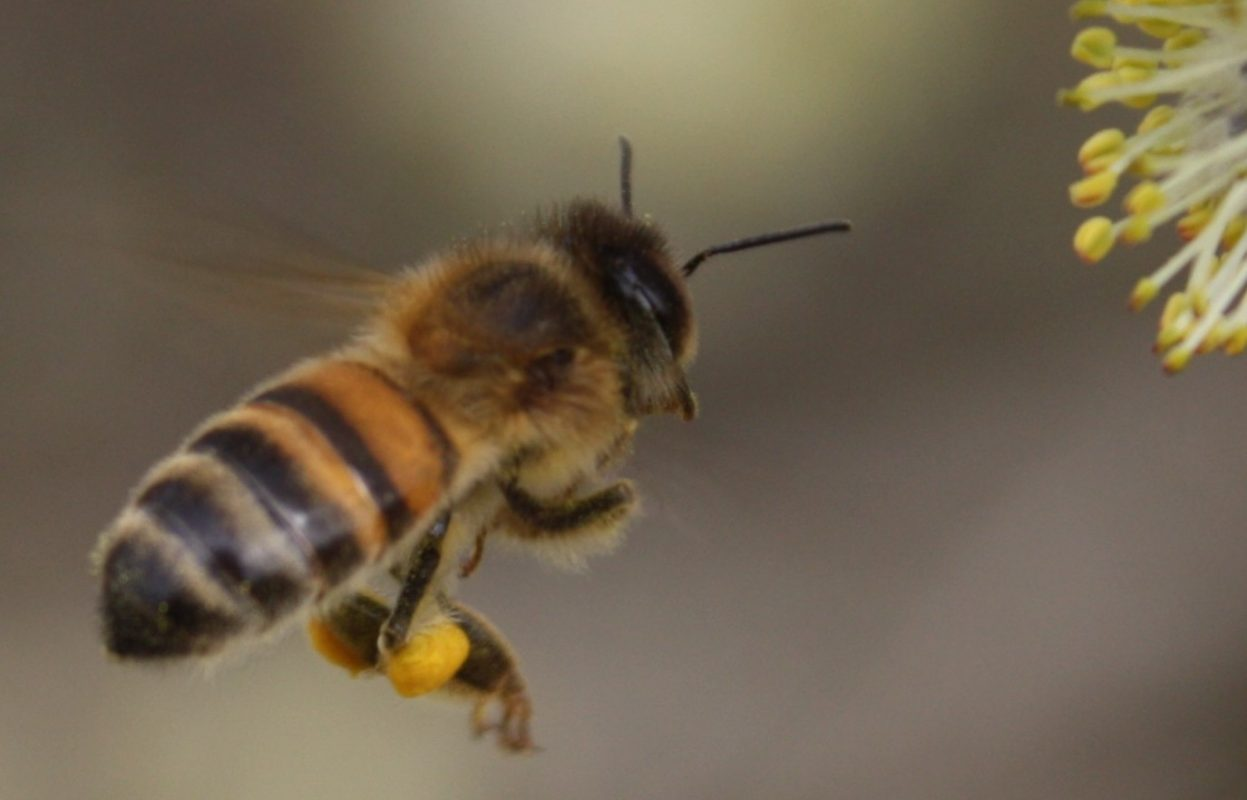 3 gestes simples pour aider les abeilles