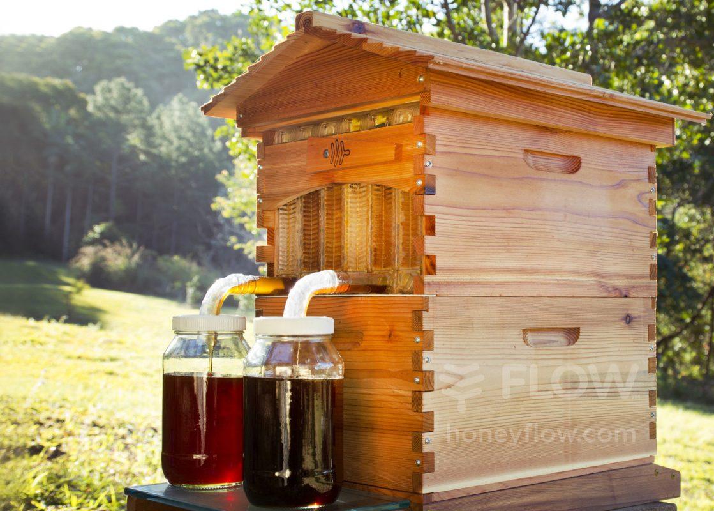 récolte de miel avec le sythème de ruche flow hive