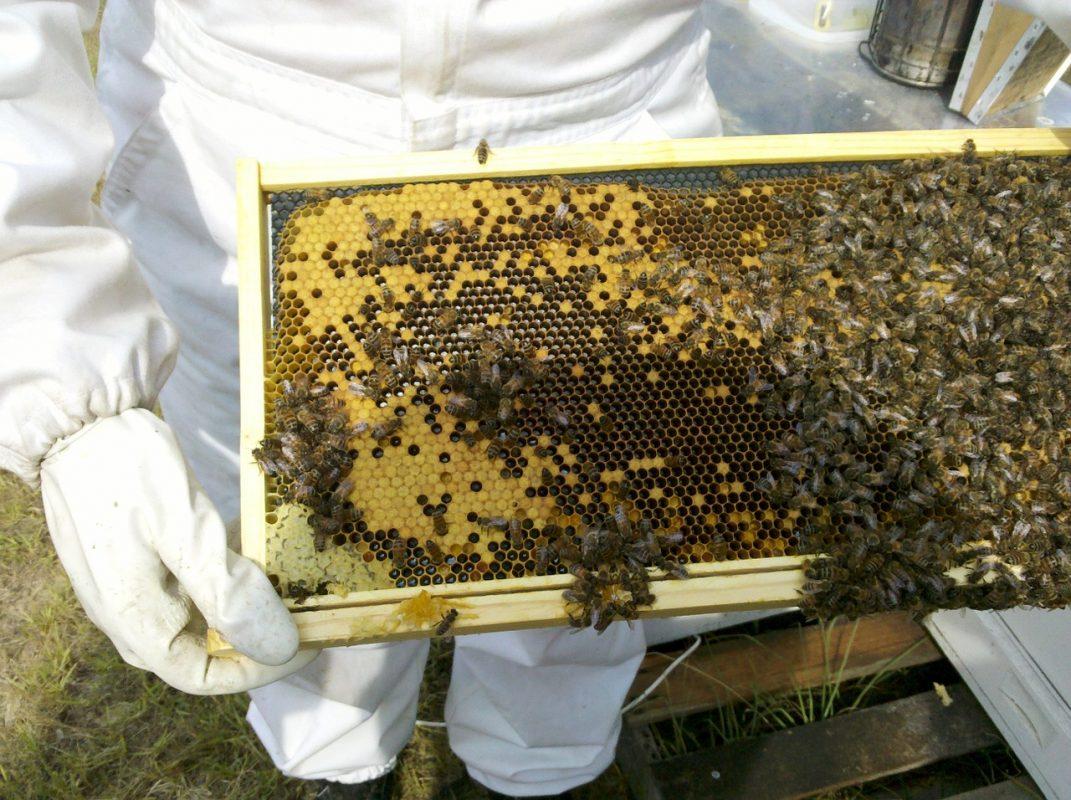 les activités de l'apiculteur