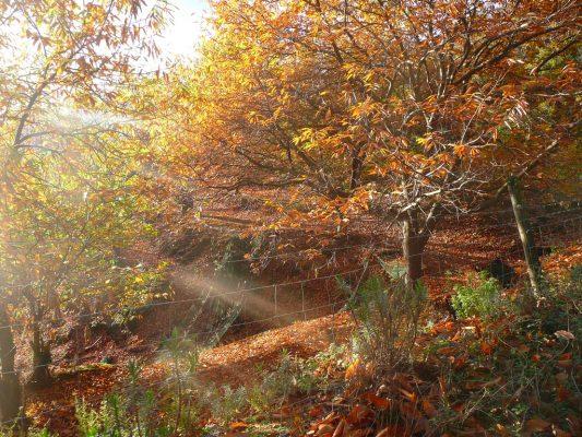Ruchers des Arts châtaigneraie à l'automne