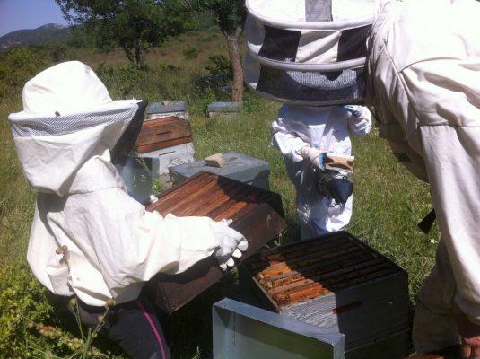 Rucher des arts ouverture de ruche