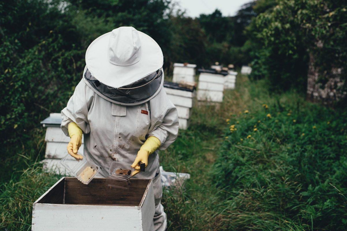 visite d'un rucher par l'apiculteur
