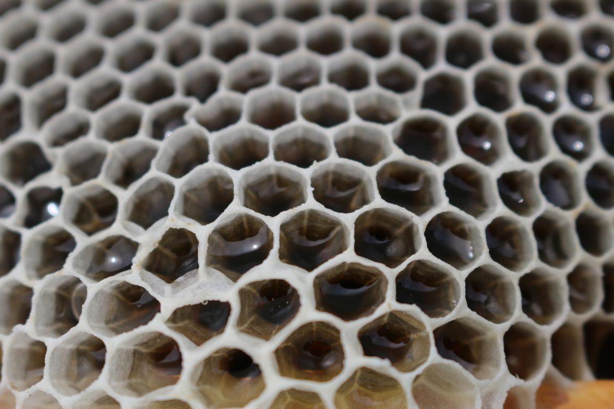 alvéoles de cadre de ruche remplie de miel