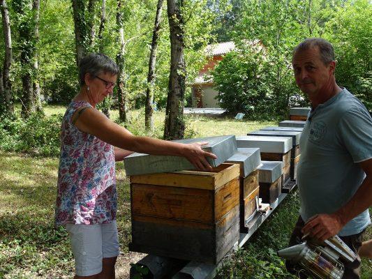 ouverture d'une ruche aux ruchers du tigou