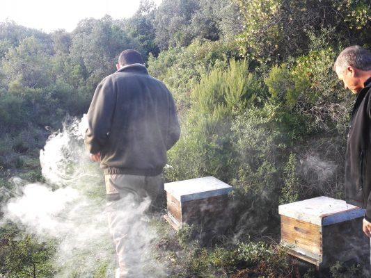 ruchers des arts visite des ruches