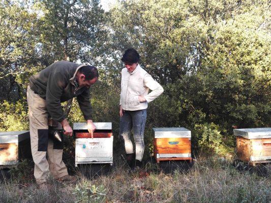 ruchers des arts ouverture de ruches