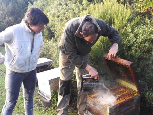 rucher des arts ouverture de ruches