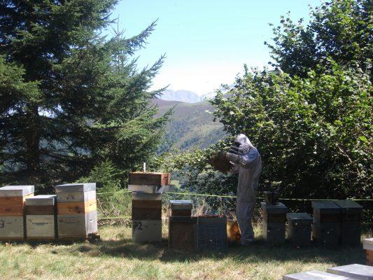 Guillaume Canil dans un rucher des Pyrénées