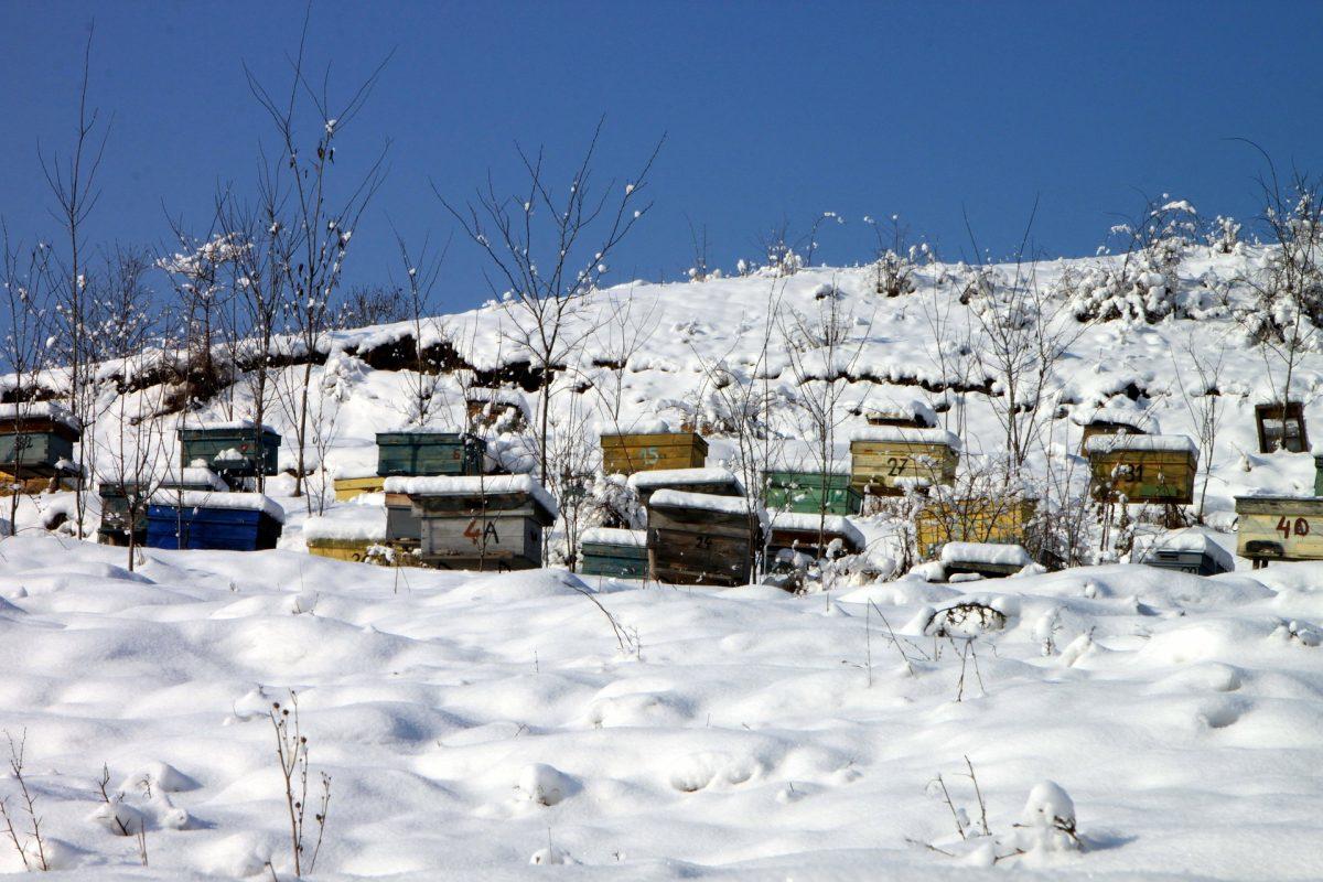 Comment les abeilles survivent-elles en hiver ?