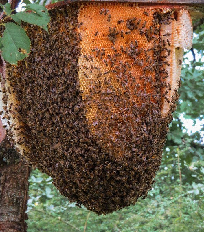 le miel à travers l'Histoire