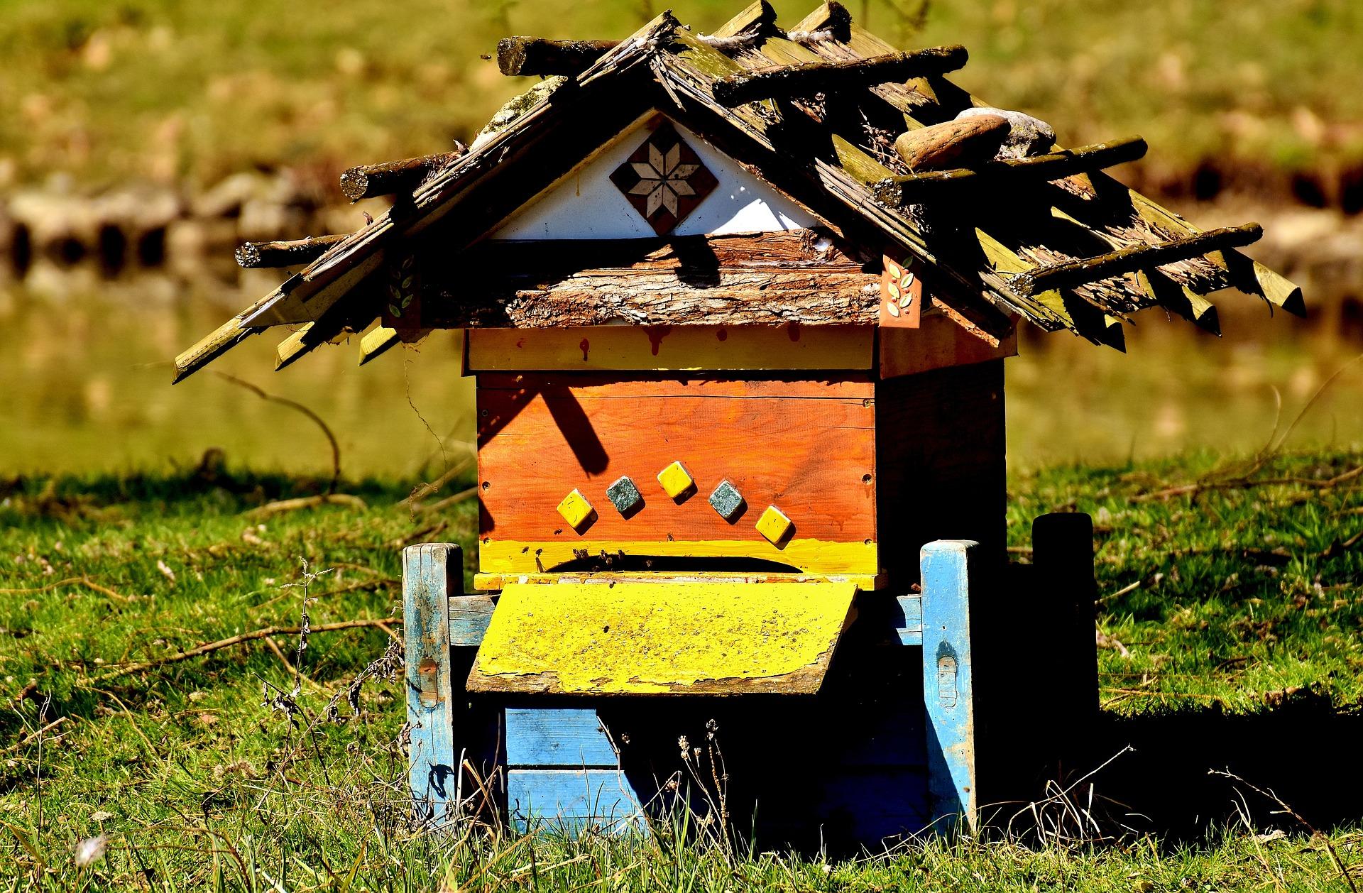 Les impressionnants chiffres de la ruche : bilan annuel de la colonie