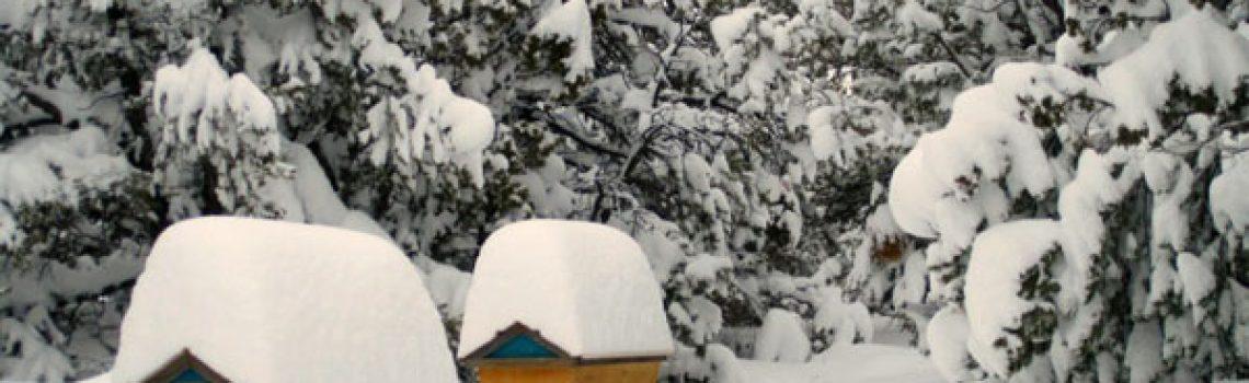 hivernage-apiculteur-ruche